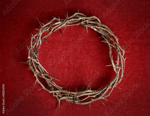 Fotografie, Obraz Crown of Thorns