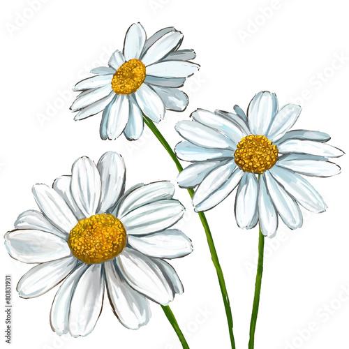 daisy vector illustration  hand drawn  painted Fototapet