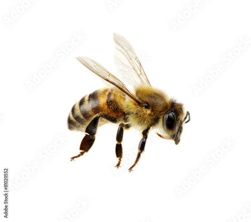 Obraz na plátně Bee