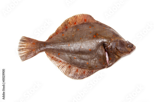 Tablou Canvas Plaice fish isolated on a white studio background.