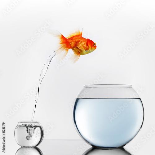 Canvastavla Gold fish jumping to big fishbowl