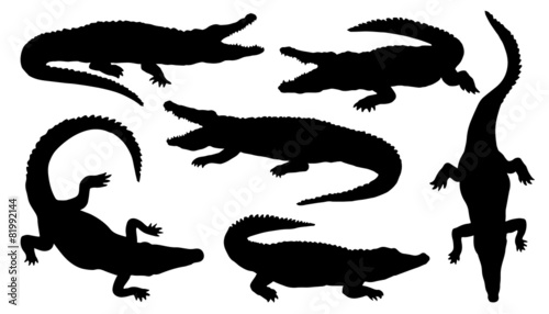 Fototapeta premium sylwetki krokodyli