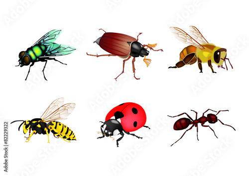 Valokuvatapetti Insectes