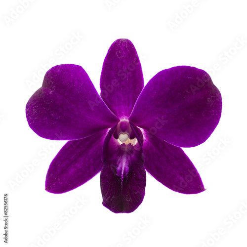 Photo Close-up of single purple Orchid flower on white background.