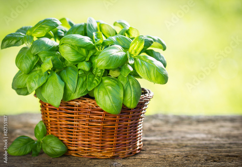 Fotomural Organic basil plant in the basket on the wooden table