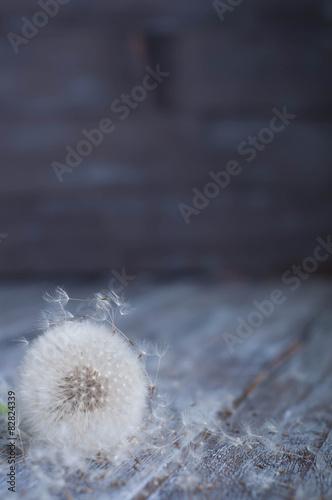 Fototapeta Dmuchawiec z bliska na ciemnym tle wysoka