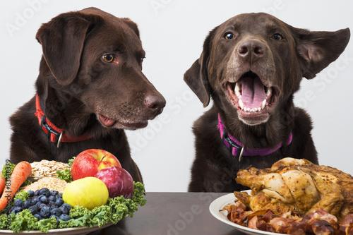 Fotografering Food diet for pets