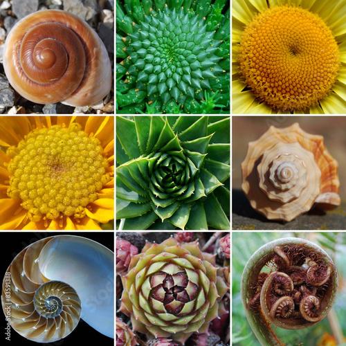 Beautiful Spirals in Nature - Phi, Golden Spiral, Fibonacci