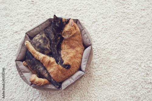 Photo Cats sleeping and hugging