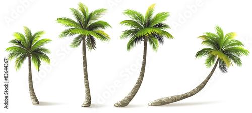 Obraz na płótnie Palm Trees