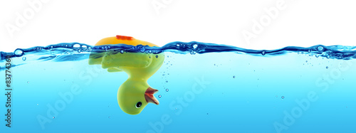Photographie duck drowned - failure and SOS concept
