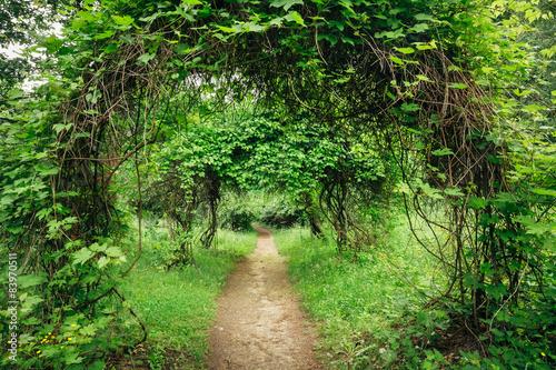 Fotografija Beautiful Alley In Park. Garden Landscaping Design