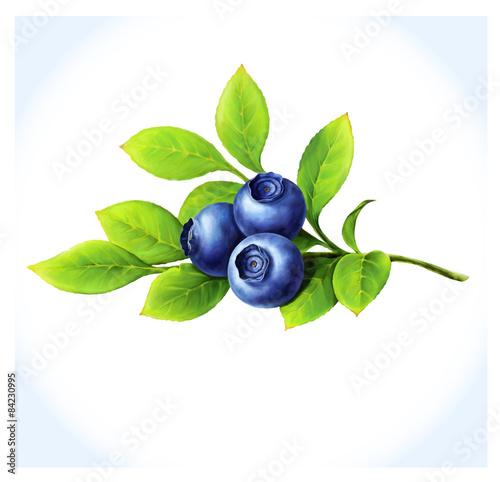 Wallpaper Mural Blueberry branchon white background.