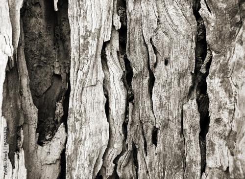 Bark texture of olive tree