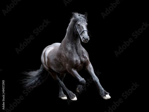Fotografie, Obraz firesian horse running isolated on black background