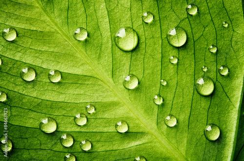 Fotografia Zielony liść z kroplami wody