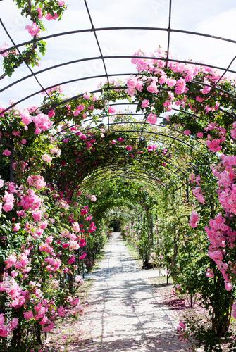 romantic path into a luxuriant  rose garden