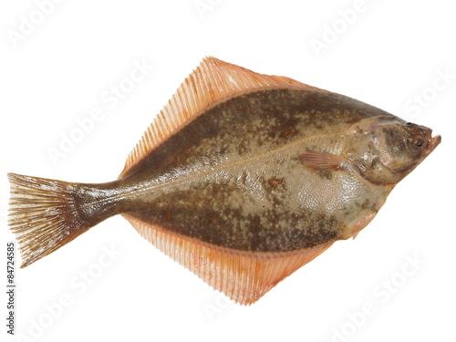 Canvastavla big fish flounder