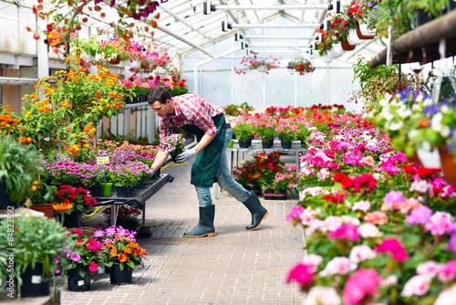 Fototapeta Gärtnerei in einem Gewächshaus für Blumen