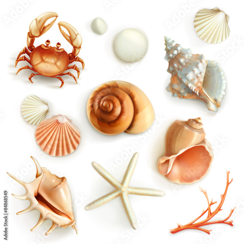 Fototapeta Seashells, set vector icons
