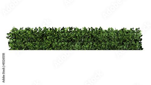 Photographie bush