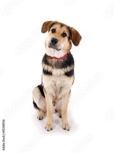 Canvas Print Junger Mischlingshund
