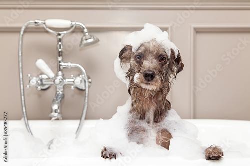 Carta da parati Funny Dog Taking Bubble Bath