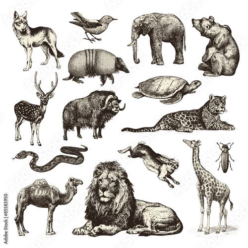 Fototapeta premium dzikie zwierzęta - zbiór ilustracji dzikiej przyrody