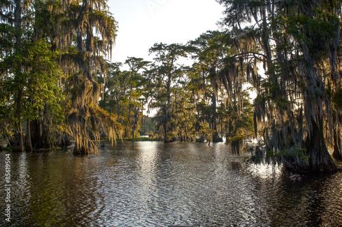 Fotografie, Obraz Louisiana Bayou