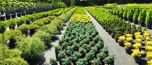 Fotografia, Obraz Gartenbau - Gärtnerei mit Pflanzen für den Garten im Freien
