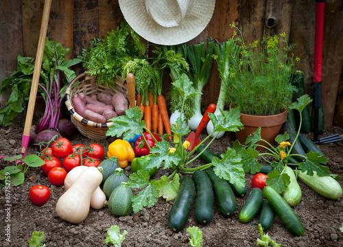 Fototapeta premium rolnictwo