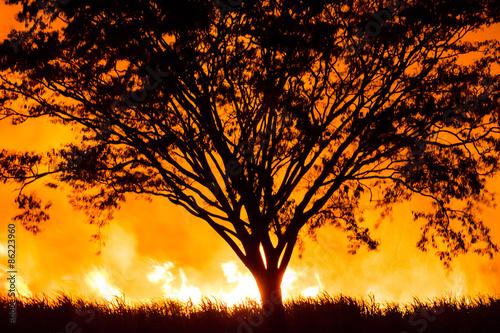 Photo Uma árvore envolvida por um fogo intenso