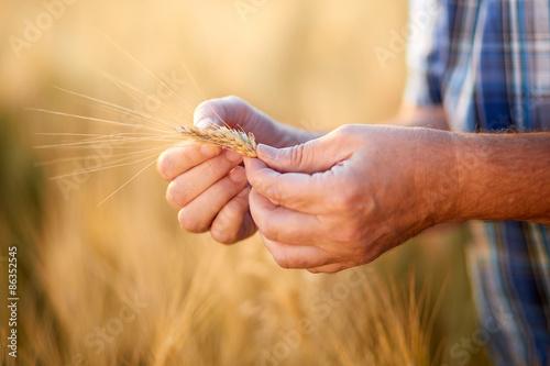 Cuadros en Lienzo Hands of male farmer checking grain