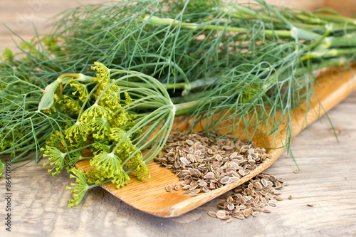 Photo dill and seeds on a wooden spoon