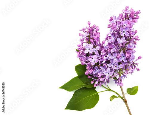 Valokuva Lilac flowers