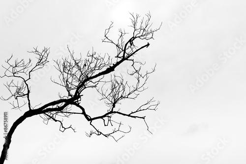 Black and White Fotobehang