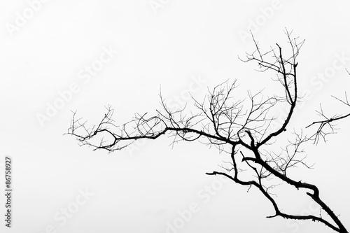 Foto Black and White