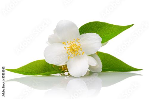 Canvas Print White flowers of jasmine