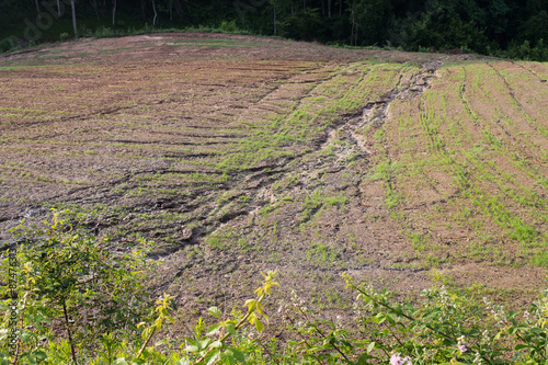 Fotografie, Tablou soil erosion on a cultivated field after heavy shower