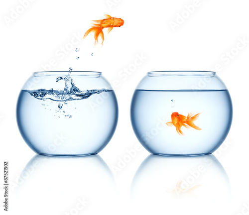 Obraz na plátně A goldfish jumping out of the fishbowl isolated on white background