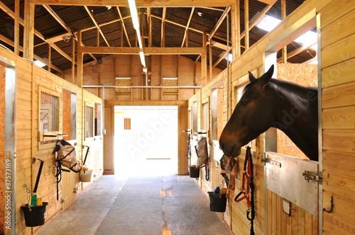 Horses at the stables Tapéta, Fotótapéta