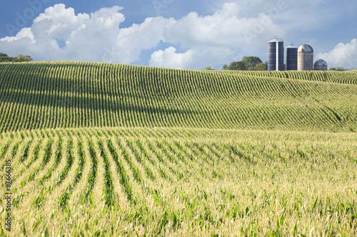 Obraz na płótnie Cornfield and silos on sunny day with clouds