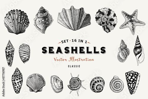 Set of vector vintage seashells Fototapet