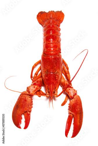 Obraz na plátně Red Lobster izolovaných na bílém pozadí