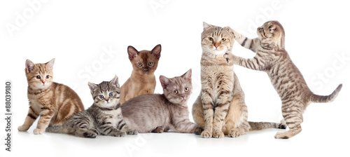 Photo various cats group isolated