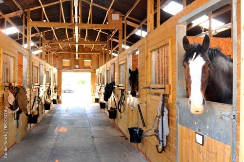 Vászonkép Horses at the stables