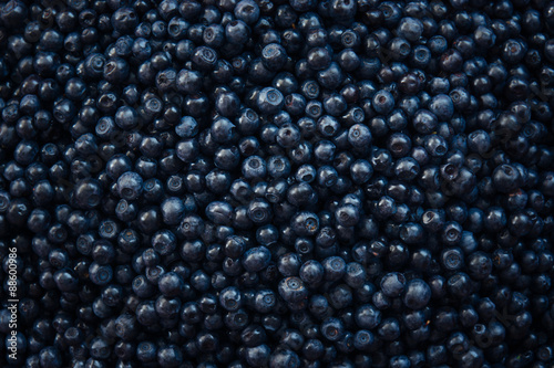 Fresh berry of bilberry from top view Fototapeta