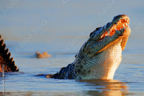 Photo Nile crocodile rising out of water