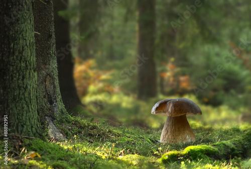 Obraz na płótnie Boletus mushroom in forest