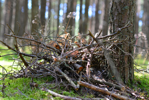 a pile of garbage in the forest of branches